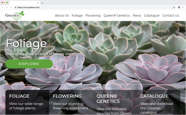 Greenex – Umbraco site